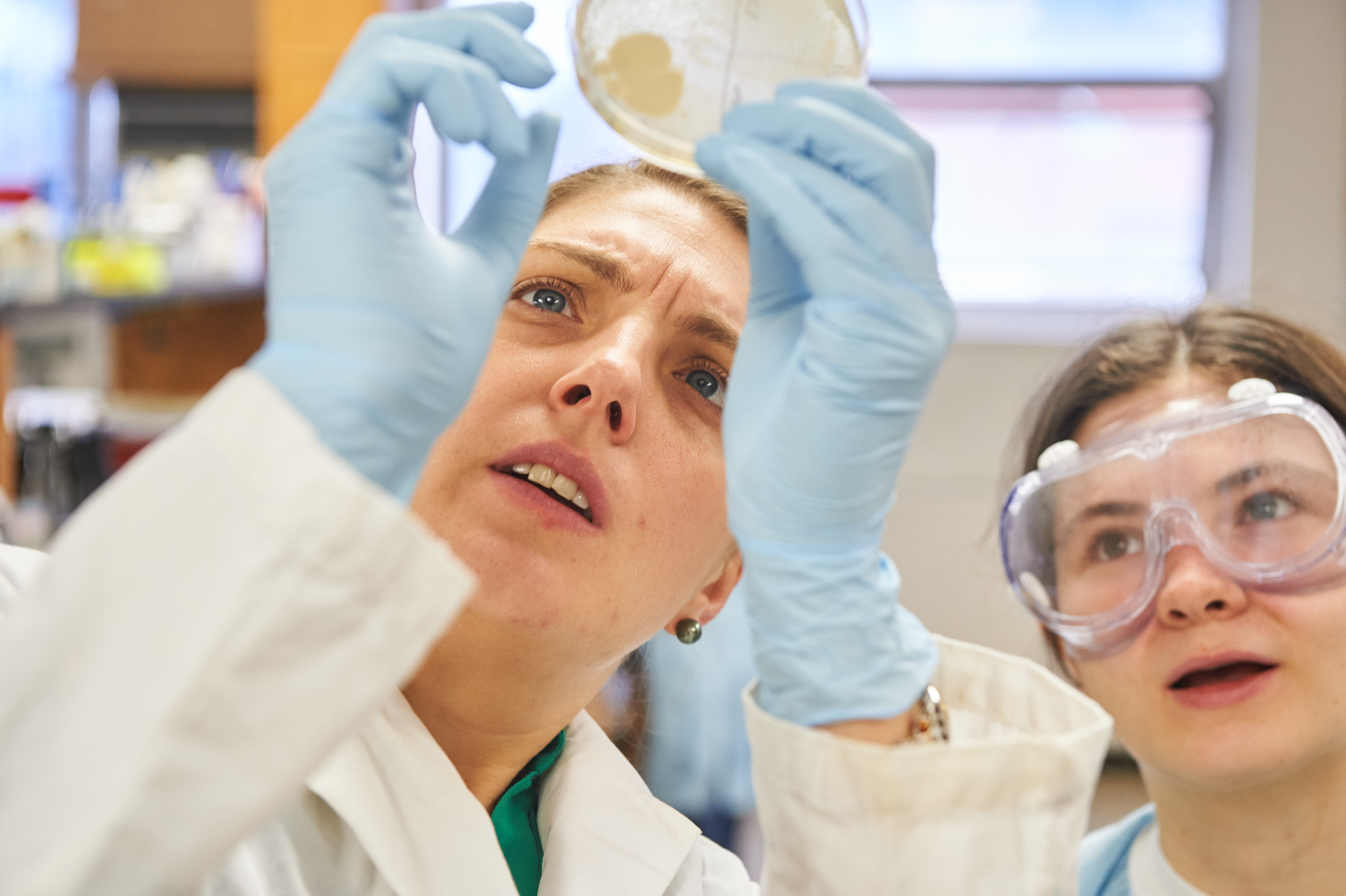 Nichole Broderick, assistant professor of molecular and cell biology, left, and Katherine Tiernan '19 (ENG) look at a bacteria culture plate in a microbiology lab at the Torrey Life Sciences Building on Nov. 10, 2015. (Peter Morenus/UConn Photo)